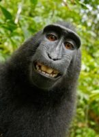 selfie taken by macaque