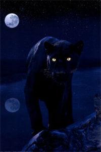 repel night tiger
