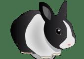 words -- to rabbit