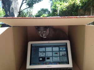 Burmese cat Veronica guards laptop in the shade