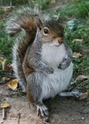 a cute squirrel is an excuse for procrastination