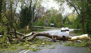 fallen tree across main road