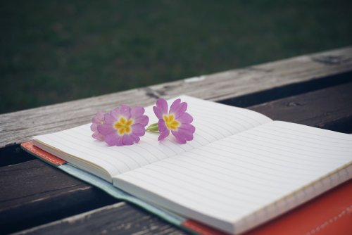 blank open notebook on bench with lilac primula flowers on it