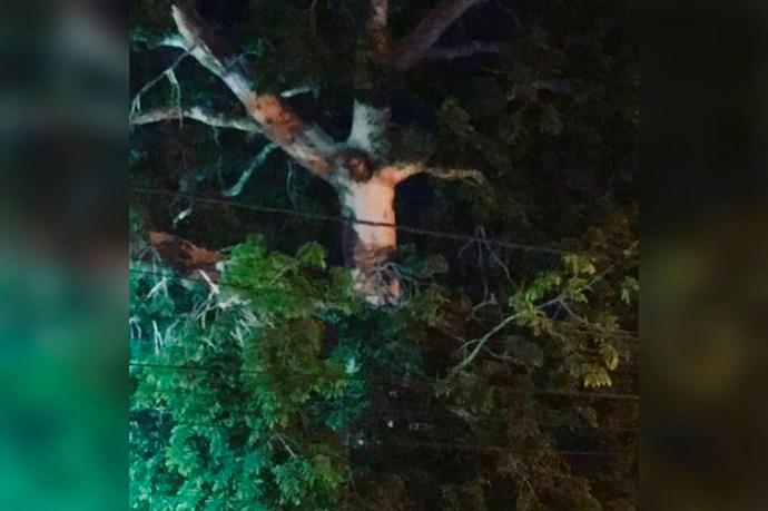 En Colombia aparece imagen de Jesucristo en árbol