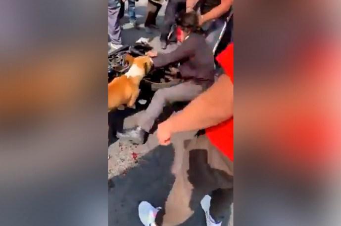 Perro callejero se une a la multitud de vecinos para darle una golpiza a un ladrón