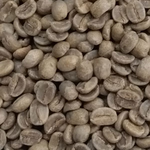 El Salvador Bourbon green coffee beans