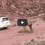 OUCH!  The Tree Stump's Brutal Revenge [VIDEO]
