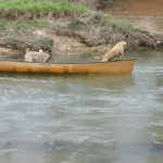 2 Canoe Bound Dogs Start Floating Downstream — You Won't Believe Who Saves Them!