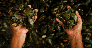Mussels Off The Seattle Coast Test Positive for OPIOIDS