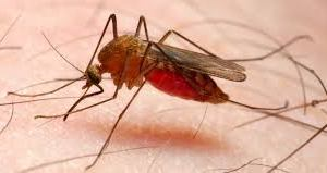 Malaria: Experts Say Disease Kills 4,500 Pregnant Women In Nigeria Annually