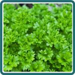 Using Parsley for Sore Throat