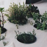 20 Ways to Use Medicinal Herbs