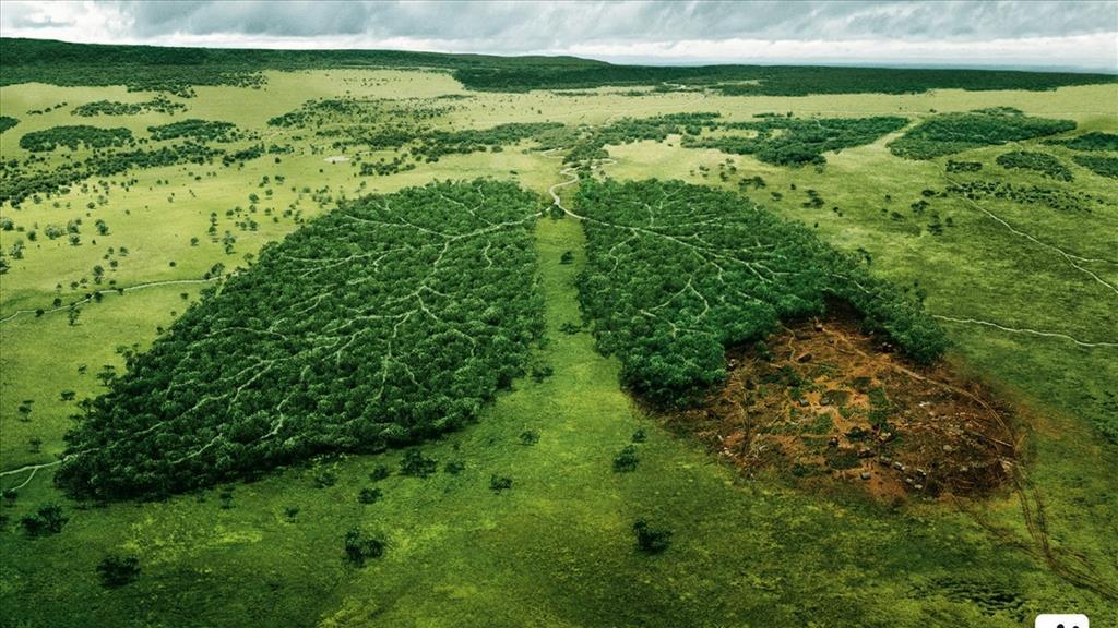 Photo de la déforestation de la forêt amazonienne, poumon de la Terre