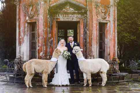 Laughing Groom with his bride as Alpaca tries to eat her bouquet at