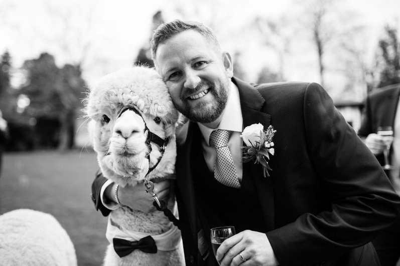 Groom poses with the Alpaca during Larmer Tree Garden wedding