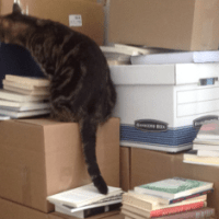 How to move a large quantity of books
