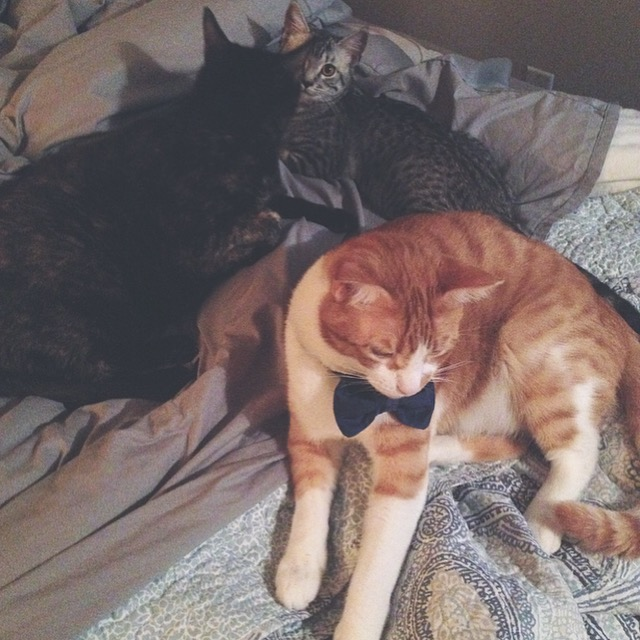 cats lounging in bed
