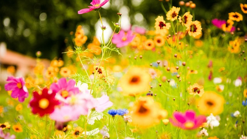 Summer-Flowers-Desktop-HD-Wallpapers