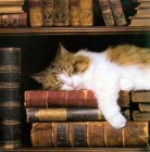 cat sleeping on old books