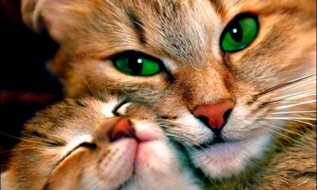 cats-lovely-cat-green-eyes