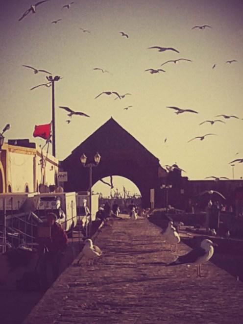 Sirályok a kikötőben