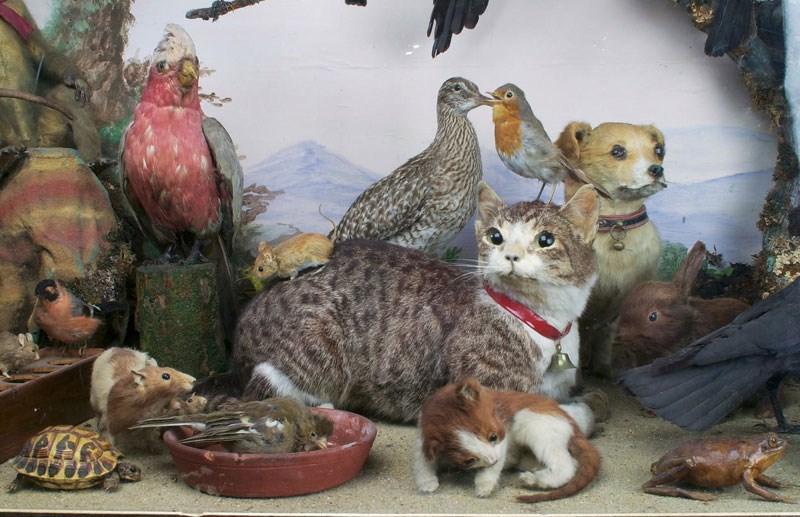 Kitömött macskakölykök esküvője – cuki vagy morbid?