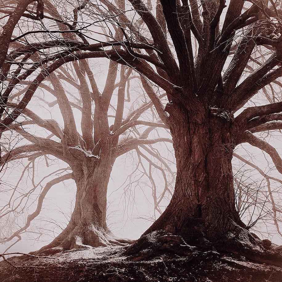 MARIKO KLUG, Erding, Germany, 3rd Place – Trees