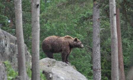 medvét