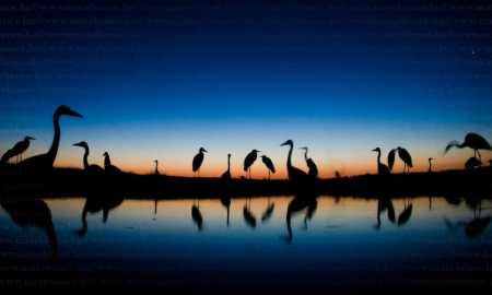 Magyar fotós nyert a BBC világversenyén