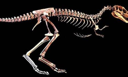 200 millió éves dinoszaurusz csontokat találtak