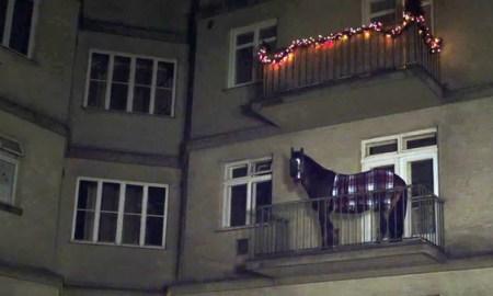 ló az erkélyen