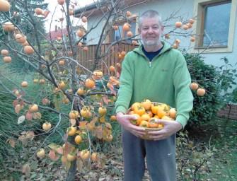 Van egy gyümölcs a kertemben, ami hihetetlen gyógyítóerővel rendelkezik