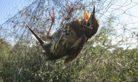 ölik a madarakat