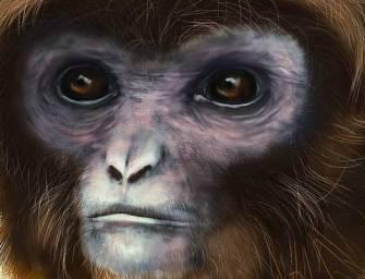 Gibbonszerű lény került elő Katalóniában