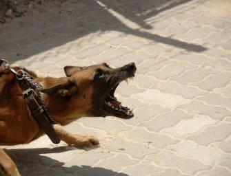 Miért idegesít a kutyaugatás?