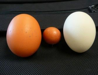 Szerinted melyik a jobb: a fehér vagy a barna héjú tojás?