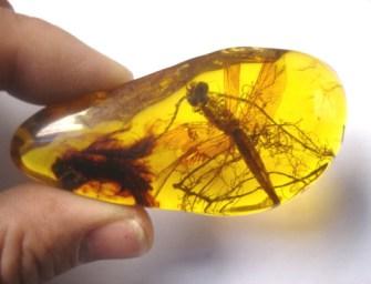 100 millió éves párzási jelenet egy borostyánkőben