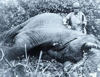 2362 darab hatalmas elefántagyarra bukkant a rendőrség