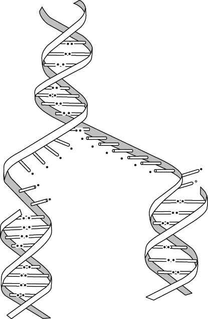 dna strand diagram