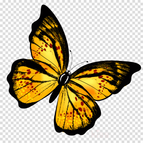 small resolution of butterfly