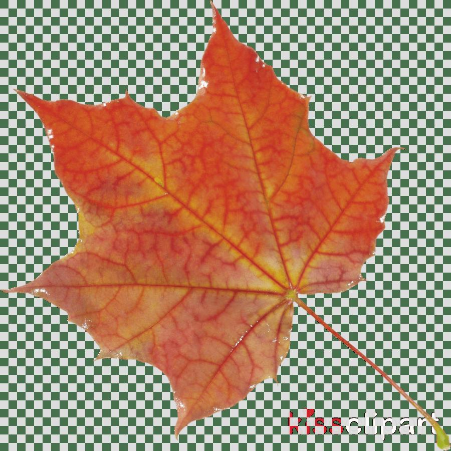hight resolution of fall leaf transparent background clipart autumn leaf color