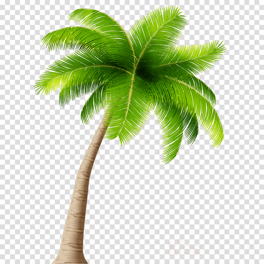 medium resolution of coconut tree png clipart palm trees coconut clip art
