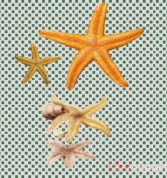 concha e estrelas do mar clipart seashell starfish [ 900 x 900 Pixel ]