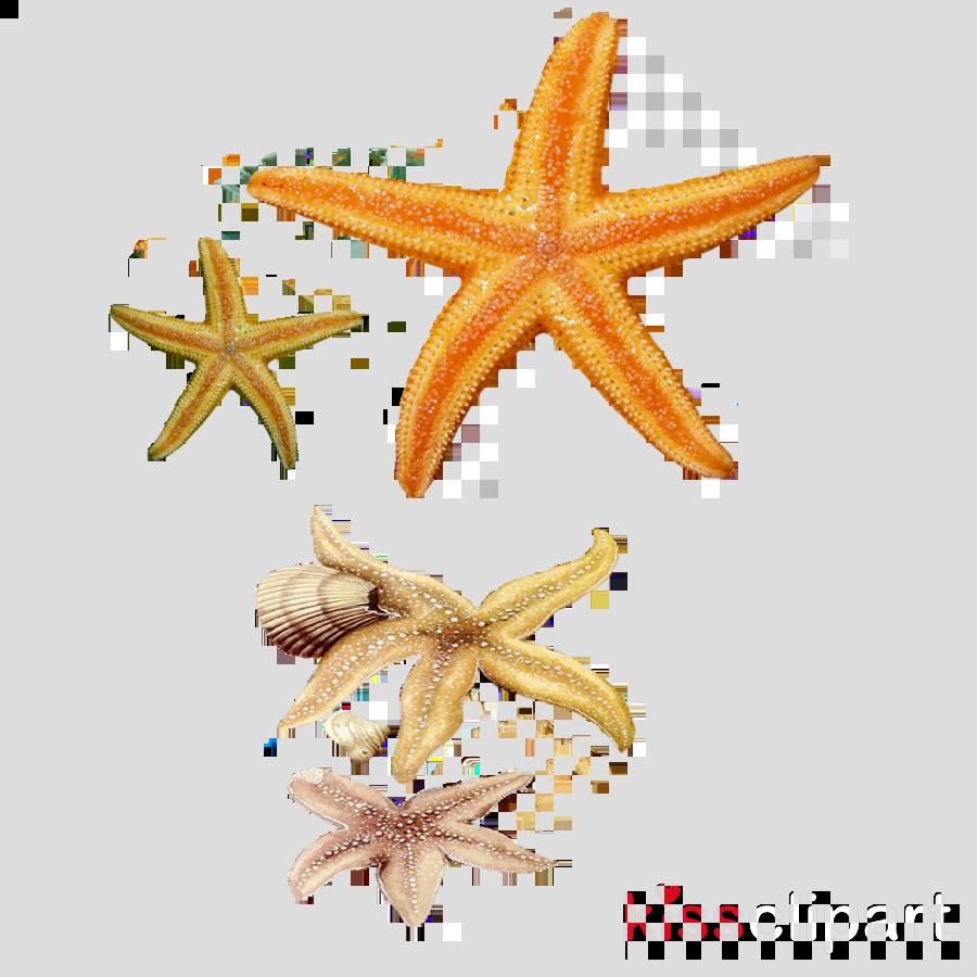 hight resolution of concha e estrelas do mar clipart seashell starfish