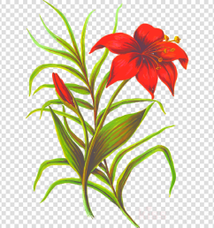 flowers with leaves png clipart flower clip art [ 900 x 900 Pixel ]
