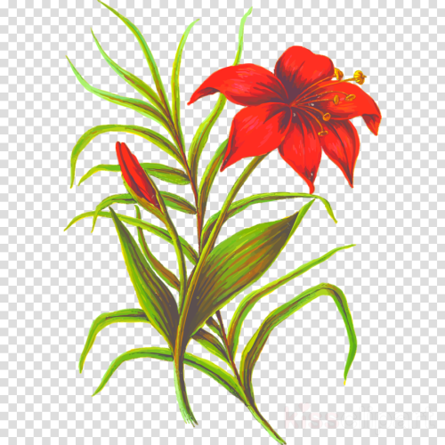 small resolution of flowers with leaves png clipart flower clip art