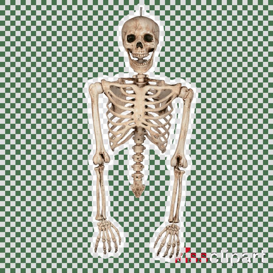 medium resolution of skeleton torso and arms clipart human skeleton torso