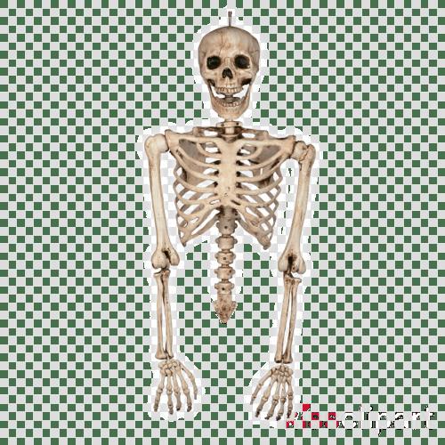 small resolution of skeleton torso and arms clipart human skeleton torso
