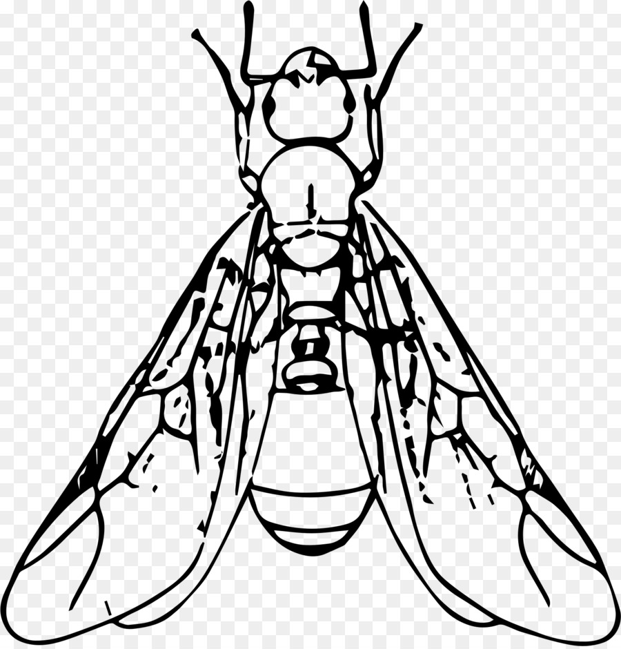 medium resolution of winged ant clipart ant clip art