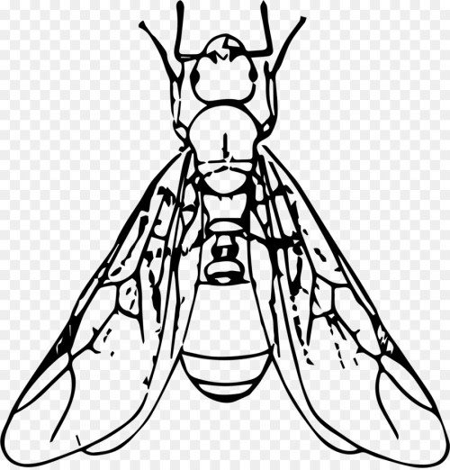 small resolution of winged ant clipart ant clip art